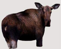 Montana Decoys Cow Moose